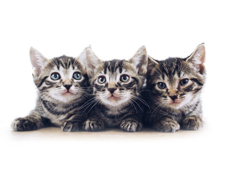 Kočičí strom, škrabadlo a odpočívadlo pro kočky